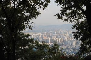 Glimpses of suburbia through nature's veil